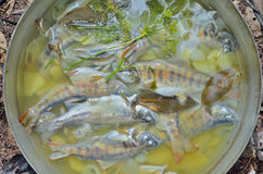 Fresh fish-soup 19 Royalty Free Stock Images