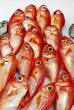 Fresh fish at spanish market stand Stock Image