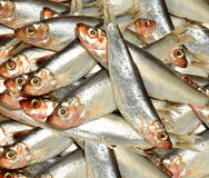 Fresh Fish Sprat Background Royalty Free Stock Image