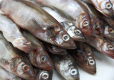 Fresh fish sprats Royalty Free Stock Photography