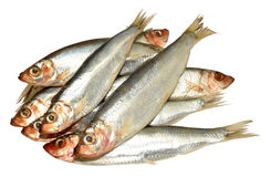 Fresh Fish Sprats Stock Photography