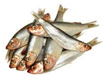 Fresh Fish Sprats Stock Images