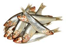Fresh Fish Sprats Royalty Free Stock Image