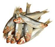 Fresh Fish Sprats Royalty Free Stock Photo
