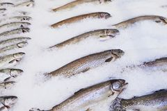 Fresh fish spread out on ice. royalty free stock images