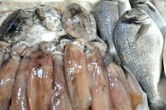Fresh fish and squid. In a fish market Stock Photo