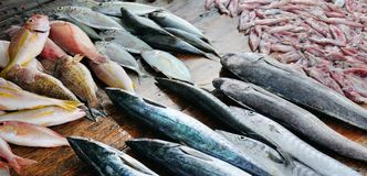 Fresh fish and squid on a wooden table. Sri Lanka. Wide photo. Fresh fish and squid on a wooden table. The fisherman`s counter. Sri Lanka. Wide photo Royalty Free Stock Photos