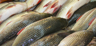 Fresh fish on stall. Background of rows on dead fish on market stall Stock Images