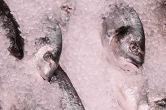Fresh fish on the store Royalty Free Stock Image