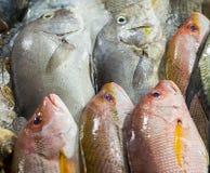 Fresh fish street market stock image