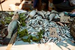 Fresh fish at the summer market stall Royalty Free Stock Image