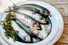 Fresh fish on table. Fresh fishes with herbs on table Stock Photography