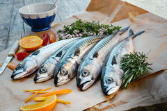 Fresh fish on table. Fresh fishes with herbs on table Royalty Free Stock Photography