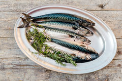 Fresh fish on table. Fresh fishes with herbs on table Royalty Free Stock Image