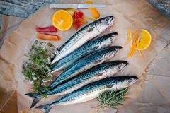 Fresh fish on table. Fresh fishes with lemon and herbs on table Stock Photography