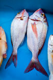 Fresh fish on table Stock Photography