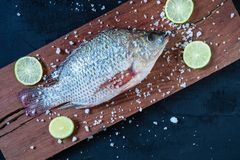 Fresh fish of tilapia on wooden chopping board stock photography
