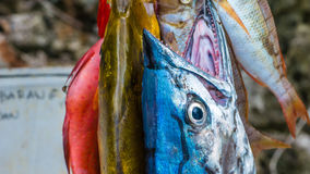 Fresh Fish to buy on Painemo Island, Raja Ampat, West Papua, Indonesia.  Royalty Free Stock Images