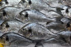 Fresh fish in a traditional market in Catalonia royalty free stock image