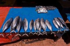 Fresh fish on traditional market Stock Photos
