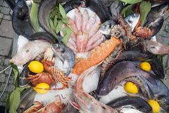 Fresh fish on a tray. Fish Ice Food Fresh fish a dozen placed together on ice trays for sale Royalty Free Stock Photos