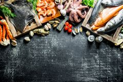 Fresh fish on tray with octopus, shrimp and crab. On dark rustic background royalty free stock photography
