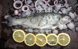 Fresh fish. Trout with  lemon and spices on dark background. Coo stock images