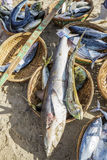 Fresh Fish and Tuna in basket on the beach Stock Photos