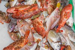 Fresh fish variety for sale at seafood market, Palma, Mallorca Royalty Free Stock Photos