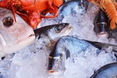 Fresh fish of various species. And prowns in ice, food background Stock Images