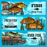Fresh fish vector sketch banners for market. Fresh fish sketch banners for sea food restaurant or market store. Vector set of fisherman catch carp and pike Stock Images
