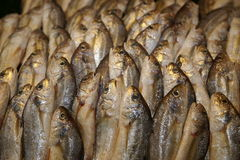 Fresh fish. Vertical stack of fresh fish Stock Photography