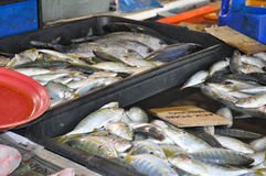 Fresh fish at the wet market. In Penang, Malaysia Royalty Free Stock Photo