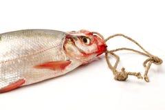 Fresh fish. On white background Stock Image