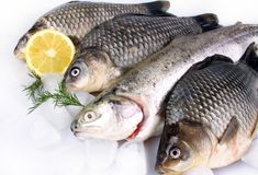 Fresh fish on white background with ice and lemon Royalty Free Stock Photography