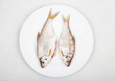 Fresh fish in white dish. Two fresh water fish  cleaned and lay on the dish ready for frying Stock Photo