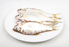 Fresh fish in white dish. Two fresh water fish  cleaned and lay on the dish ready for frying Stock Images