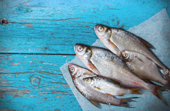 Fresh fish a wooden background Stock Images