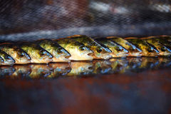 Fresh fish on wooden background. Rod fishing. Perch Stock Images