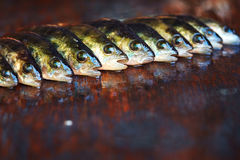 Fresh fish on wooden background. Rod fishing. Perch Royalty Free Stock Photos
