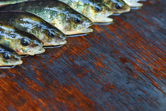 Fresh fish on wooden background. Rod fishing. Perch Stock Photography