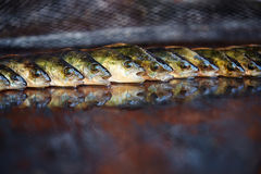 Fresh fish on wooden background. Rod fishing. Perch Royalty Free Stock Images