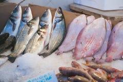 Fresh fished fish at the fish market Royalty Free Stock Photos
