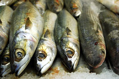 Fresh fishes Stock Photography