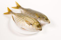 Fresh fishes. Two fishes with yellow stripes on a plate Stock Photos