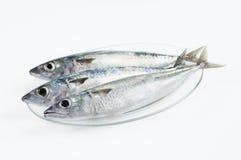 Fresh fishes Stock Image