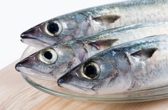 Fresh fishes. Three fishes on a plate Stock Photography