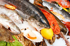 Fresh fishes Stock Photo