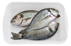 Fresh fishes. Stock Photos