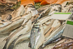 Fresh fishes Stock Photos
